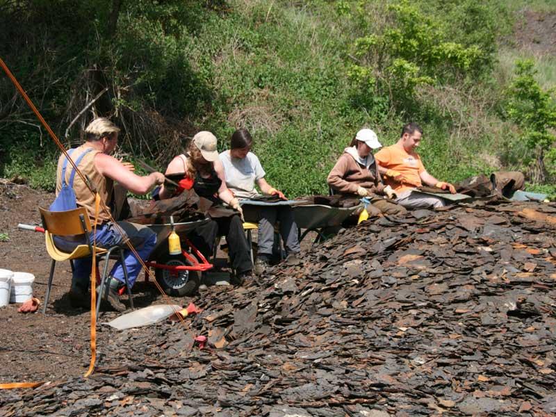 Verslag Werkgroep Fossielen 20 Februari