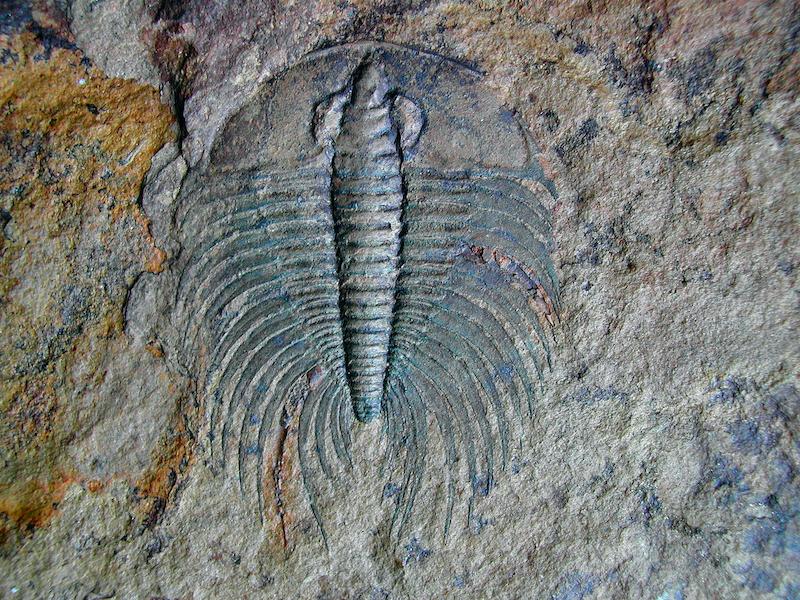 * Afgelast * Maandag 16 Maart 2020: Paul Hille – Trilobieten